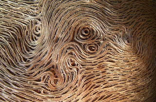 Grosse verrue sur tronc d 39 un ceriser pleureur broussin - Coupe transversale d un tronc d arbre ...